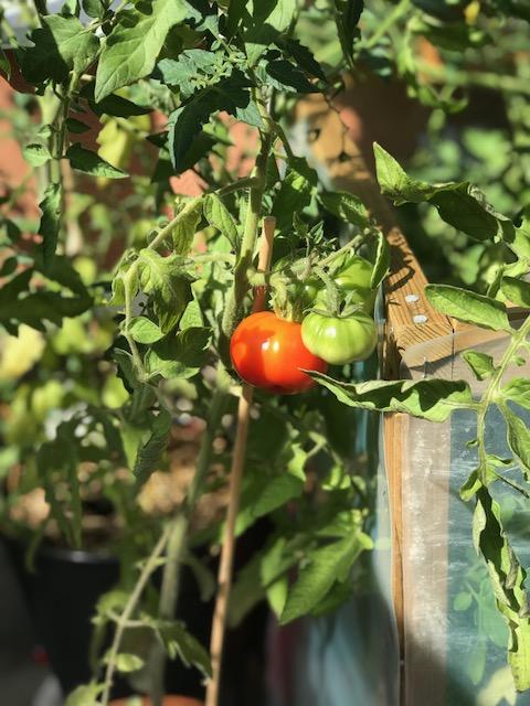 Så gör du egen tomatsås